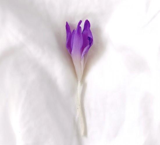 Easter Holidays. Fashion Blogger Girl by Style Blog Heartfelt Hunt. Pretty purple crocus relaxing in white bedlinen.