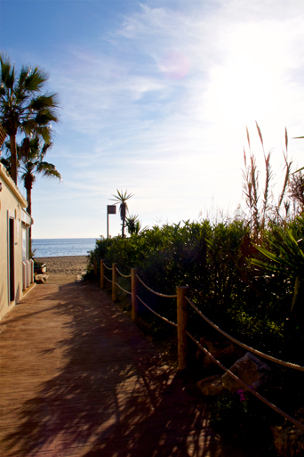 Sunny path to the beach lined with palm trees