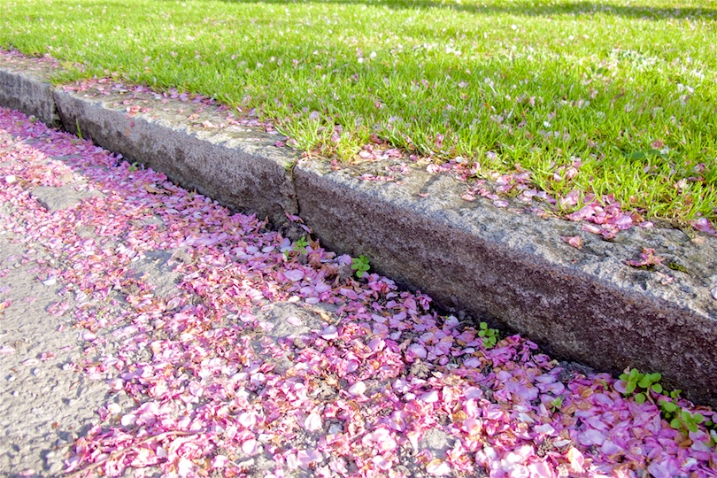 Streets and grass covered in pink petals
